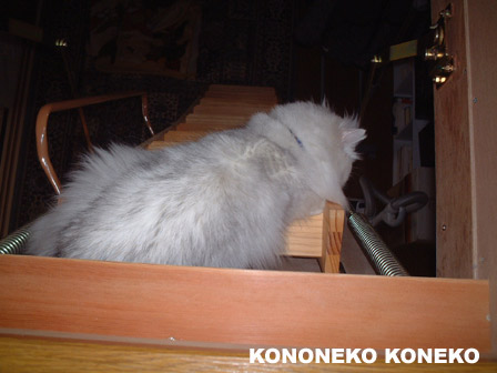 この猫仔猫-バニラ345-