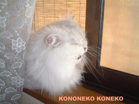 この猫仔猫-バニラ365-
