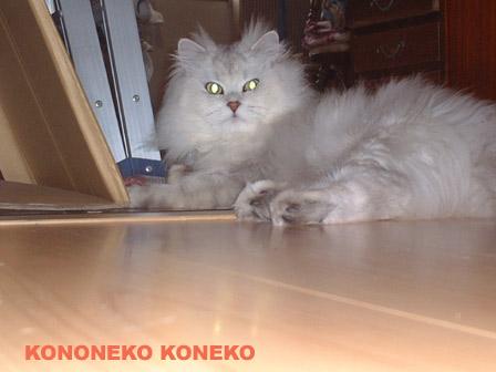 この猫仔猫-バニラ366-