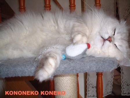 この猫仔猫-バニラ383-