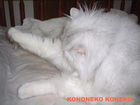 この猫仔猫-バニラ385-