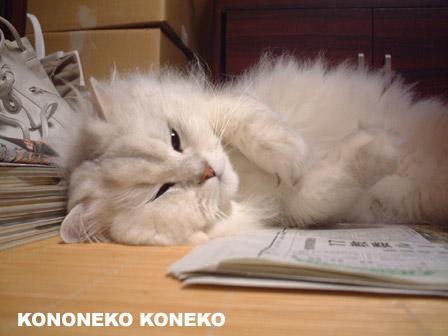 この猫仔猫-バニラ389-