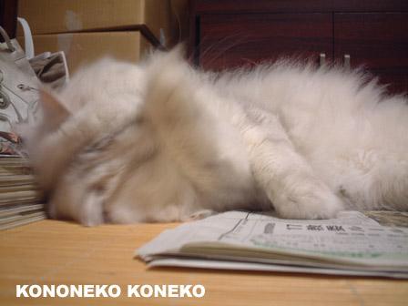この猫仔猫-バニラ390-