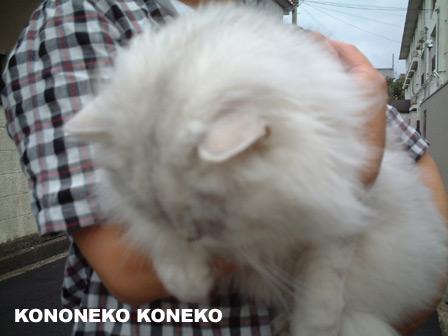 この猫仔猫-バニラ396-