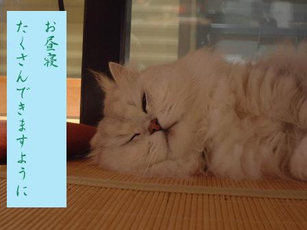 この猫仔猫-バニラ400-