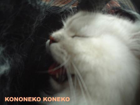 この猫仔猫-バニラ403-