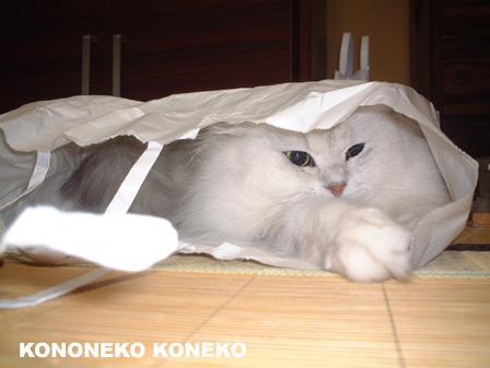 この猫仔猫-バニラ412-