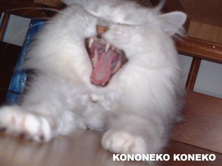 この猫仔猫-バニラ423-