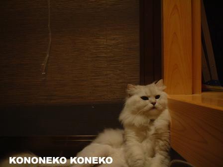 この猫仔猫-バニラ433-