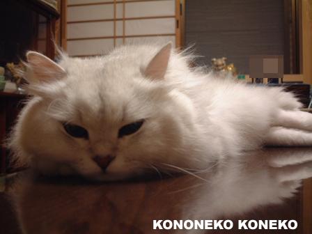 この猫仔猫-バニラ437-
