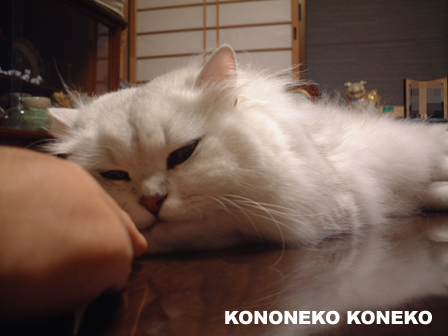 この猫仔猫-バニラ439-