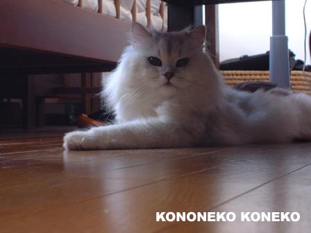 この猫仔猫-バニラ440-