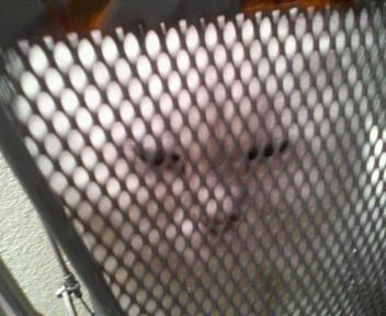 この猫仔猫-バニラ446-