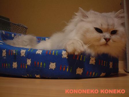 この猫仔猫-バニラ458-