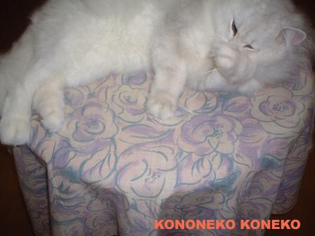 この猫仔猫-バニラ477-