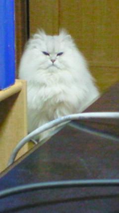 この猫仔猫-バニラ537-